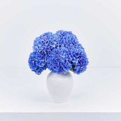 Bizzie Blue