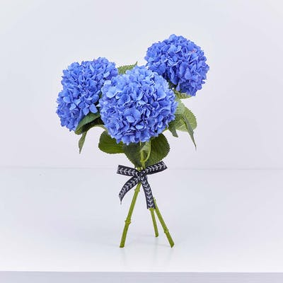 Beaming Blue